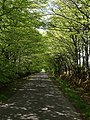 Lane to the Sportsmans - geograph.org.uk - 428952.jpg