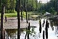 Leśny staw - panoramio (4).jpg