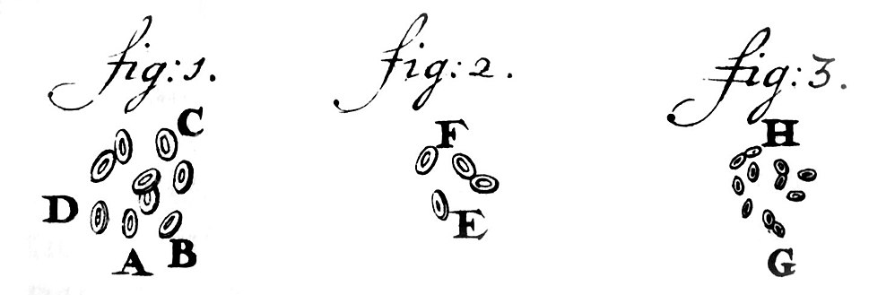 Leeuwenhoek1719RedBloodCells
