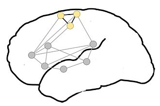 Neural circuit - Proposed organization of motor-semantic neural circuits for action language comprehension. Gray dots represent areas of language comprehension, creating a network for comprehending all language. The semantic circuit of the motor system, particularly the motor representation of the legs (yellow dots), is incorporated when leg-related words are comprehended. Adapted from Shebani et al. (2013)
