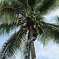 Liberia, Africa - panoramio (272).jpg