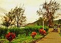 Lihue, Kauai, Hawaii - panoramio (25).jpg