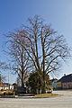 Linden am Hauptplatz von Großschönau 2014 03 02 Naturdenkmal GD-101.jpg