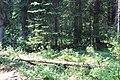 Little Yoho Valley IMG 4843.JPG