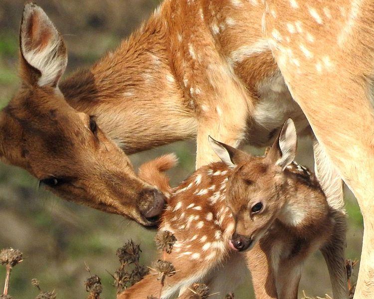 File:Love of Mother.jpg