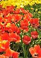 M^m Flores en el parque en la Haya - Creative Commons by gnuckx - panoramio (19).jpg
