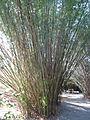 Magnolia Plantation and Gardens - Charleston, South Carolina (8556570498).jpg
