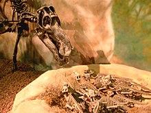 Kohlenstoff Dinosaurier-Weichteile