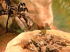 Maiasaura med ungar, vid Wyoming Dinosaur Center