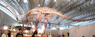 Mamenchisaurus - Mounted skeleton of M. sinocanadorum, Japan
