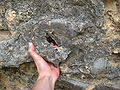 Margalef rock climbing.jpg
