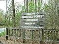 Marshall forest1.jpg