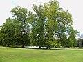Martonvásár - Brunszvik-kastély parkja - 1172.jpg
