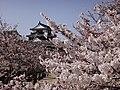 Marunouchi, Matsuyama, Ehime Prefecture 790-0008, Japan - panoramio (61).jpg