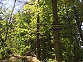 May 2018, Woodland Trails Scout Camp2.jpg