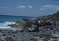 Me on Ironshore. North Coast. Rachicallis. 1979. (Duplicate) (38839942972).jpg