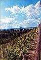 Melnik View on 'Holy' Mountain Rip.jpg