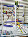 Melopsittacus undulatus -pets with playgym and toys-8a.jpg