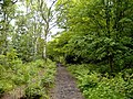 Middle Walk, below Helsby Crag - geograph.org.uk - 175809.jpg