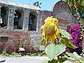 Mission capistrano church bells walls sunflowers arches.jpg
