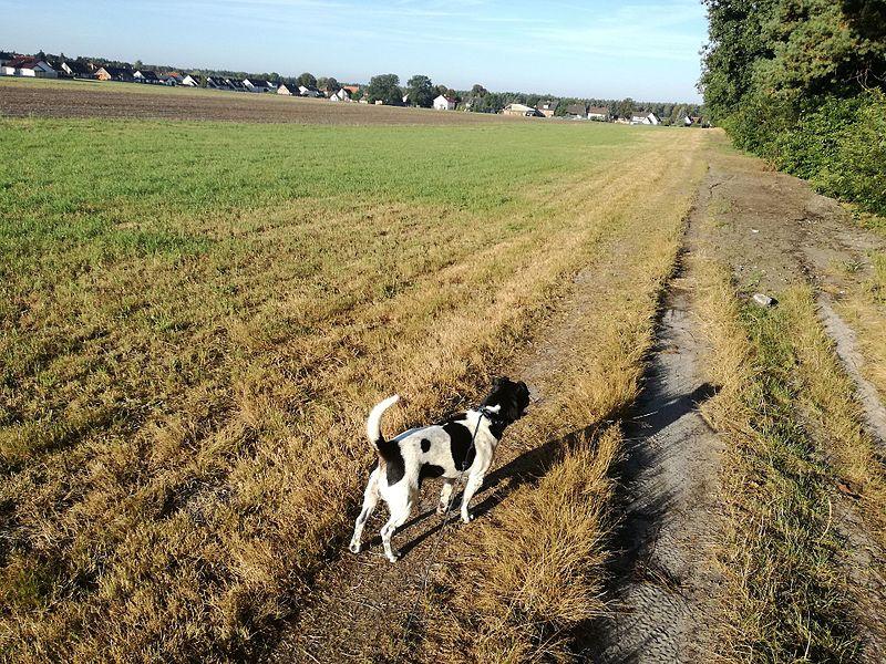 File:Mit Merlin spazieren gehen.jpg