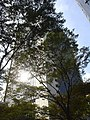 Mizuho Bank hea d office looked over lithocarpus roadside trees.jpg