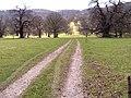 Moccas Deer Park - geograph.org.uk - 148852.jpg
