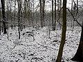 Mohyly - Zlukov u Veselí nad Lužnicí - západní část 1.JPG