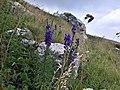 Monte Baldo (VR) - 1.jpg