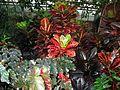Montréal Jardin botanique 599 (8213133895).jpg