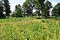 Mound in Lizard Mound County Park.jpg