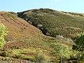 Mountain stream, Cwm Clywedog - geograph.org.uk - 601160.jpg