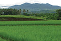 Mt. Cagua, Cagayan Province, with rice fields - ZooKeys-266-001-g008.jpg