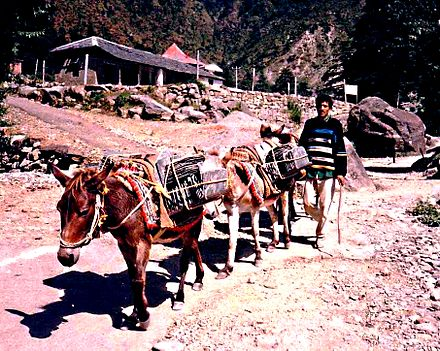 Animals used to transport goods - Mules carrying slate roof tiles in India in 1993. Mules carrying slate. Dharamsala.jpg