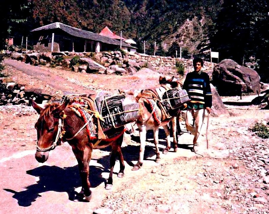 Mules carrying slate. Dharamsala