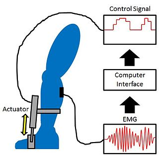 Proportional myoelectric control