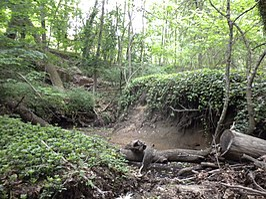 Hadrosaurus Foulkii Leidy Site