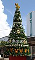 Napier Christmas Tree (31710969261).jpg