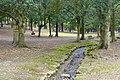 Nara Park - Nara, Japan - DSC07491.jpg