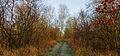 Nationaal Park Weerribben. Voetpad door laagveenmoeras 01.jpg