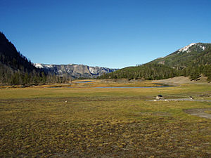 Mount Haynes - Image: National Park Meadow YNP2007