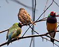 National Aviary (13020415064).jpg