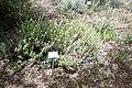 National Botanic Garden of Israel 02.jpg