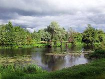 Nature of Volgograd Oblast 003.jpg