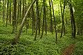 Nature reserve Žižkův vrch in summer 2012 (4).JPG