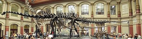 http://upload.wikimedia.org/wikipedia/commons/thumb/3/39/Naturkundemuseum_Berlin_-_Dinosaurierhalle.jpg/500px-Naturkundemuseum_Berlin_-_Dinosaurierhalle.jpg