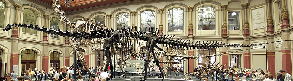 Naturkundemuseum Berlin - Dinosaurierhalle
