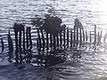 Naturschutzgebiet Ewiges Meer 31-10-2018 Chr Didillon DSC01778 (91).jpg