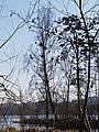Naturschutzgebiet Großer Rußweiher 07.jpg