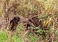 Natuurgebied Petgatten De Feanhoop. 19-10-2020. (actm.) 25.jpg